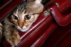 Il gatto che sta osservando da un sac Immagine Stock