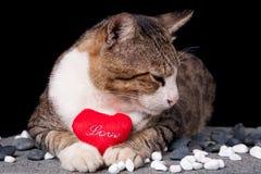 Il gatto che tiene il cuore rosso ha modellato l'amore con fondo nero Immagine Stock Libera da Diritti