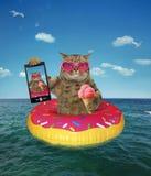 Il gatto con il gelato fa il selfie fotografia stock libera da diritti