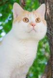 Il gatto con gli occhi arancioni Immagini Stock Libere da Diritti