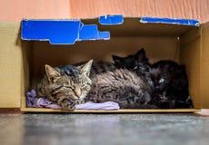Il gatto con i piccoli gattini dorme in una scatola di cartone, family_ del gatto fotografia stock libera da diritti