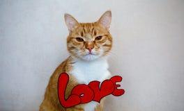 Il gatto con il ` di amore del ` di parola Immagini Stock