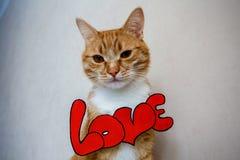 Il gatto con il ` di amore del ` di parola Fotografie Stock Libere da Diritti