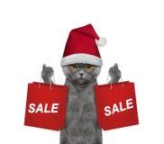 Il gatto con il vestito da festa di Natale sostiene con il sacchetto della spesa Immagini Stock Libere da Diritti
