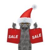 Il gatto con il vestito da festa di Natale sostiene con il sacchetto della spesa Fotografia Stock Libera da Diritti