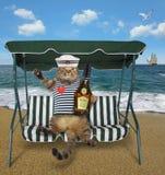 Il gatto con rum si siede su un banco dell'oscillazione fotografie stock libere da diritti