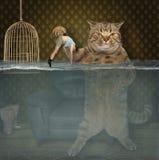 Il gatto conserva il suo animale domestico fotografie stock