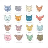 Il gatto cresce insieme dell'icona royalty illustrazione gratis