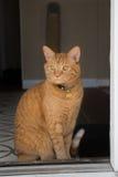 Il gatto dell'interno guarda fisso fuori attraverso una porta aperta Immagini Stock Libere da Diritti