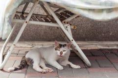Il gatto della via mette sul sentiero per pedoni Immagini Stock Libere da Diritti