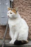 Il gatto della via si siede contro la parete Lo sguardo triste di un animale senza tetto fotografia stock