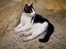Il gatto della via si trova sulla terra Fotografia Stock