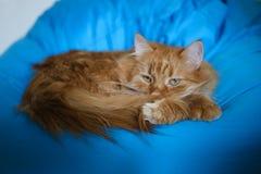 Il gatto dello zenzero che siiting su una sedia della borsa vuole a cadere addormentato immagini stock libere da diritti