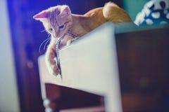 Il gatto di Brown gode di sulla tavola di vetro fotografia stock libera da diritti