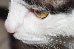 """Il gatto di casa si presta ad essere """"un modello """" fotografia stock libera da diritti"""