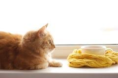 Il gatto di rosso odora una tazza calda di tè in una sciarpa su un davanzale della finestra immagine stock libera da diritti