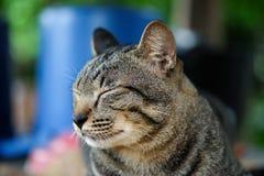 Il gatto di sonno per si rilassa Fotografie Stock