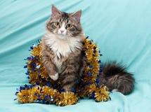 Il gatto di soriano con giallo osserva il gioco con la ghirlanda dorata di Natale Fotografia Stock