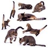 Il gatto differente immagini stock