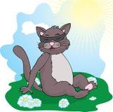 Il gatto divertente del gatto basks al sole Immagine Stock Libera da Diritti