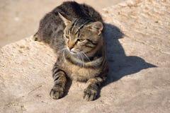 Il gatto domestico, il giorno soleggiato pigro, lapida la via cobbled fotografie stock