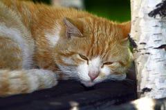 Il gatto domestico respira fotografie stock libere da diritti