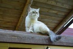 Il gatto domestico si siede sotto il tetto fotografia stock