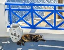 Il gatto dorme alla casa del seaview fotografia stock