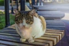 Il gatto dorme su un banco al sole fotografia stock