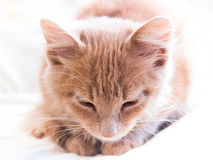 Il gatto dorme sul letto Fotografie Stock Libere da Diritti
