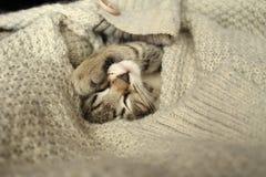 Il gatto dorme in un maglione Immagini Stock