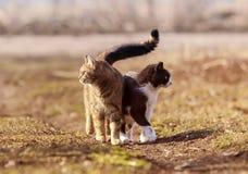 Il gatto due che sta in un prato huddled insieme e guardando in Di fotografia stock libera da diritti