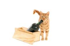 Il gatto e imbottiglia una scatola Fotografia Stock