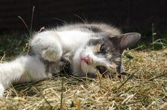 Il gatto e la natura di estate Fotografia Stock Libera da Diritti