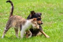 Il gatto ed il cane stanno toccando le loro teste Bella amicizia animale immagine stock
