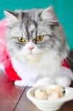 Il gatto ed il biscotto Fotografia Stock