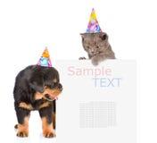 Il gatto ed il cane in cappelli di compleanno che danno una occhiata da dietro svuotano il bordo È fotografie stock