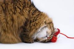 Il gatto ed il mouse sui precedenti bianchi Fotografia Stock