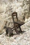 Il gatto ed il sedile Cobbled la vecchia città Rhodes Greece della via Immagini Stock Libere da Diritti