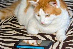 Il gatto esamina la vostra foto nel telefono fotografia stock