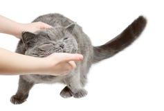 Il gatto felice è soddisfatto con la mano Fotografia Stock