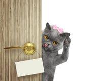 Il gatto felice dà una occhiata a fuori da dietro la porta Isolato su bianco immagine stock
