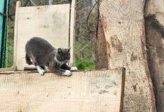 Il gatto frantuma i suoi artigli Immagini Stock