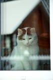Il gatto fuori della finestra disappunto immagini stock