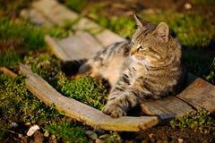 Il gatto gode del sole della molla Fotografie Stock