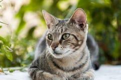 Il gatto grazioso sta guardando Immagini Stock Libere da Diritti