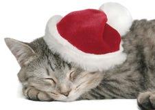 Il gatto grigio Immagini Stock