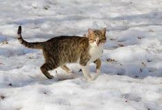 Il gatto grigio della via si siede nella neve un giorno di inverno freddo immagine stock libera da diritti