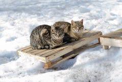 Il gatto grigio della via si siede nella neve un giorno di inverno freddo fotografia stock libera da diritti