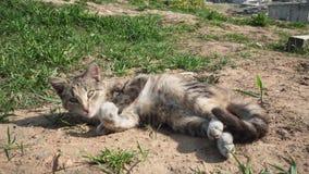 Il gatto grigio si trova sulla sabbia e lecca la pelliccia stock footage